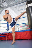 Boxer. Royalty Free Stock Photo