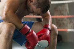 Boxer in the corner Royalty Free Stock Image
