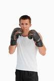Boxer in defensive position royalty free stock photography