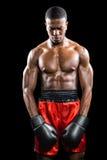 Boxer, der nach Ausfall aufwirft Stockfotografie