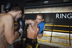 Boxer, der Sparring tut Stockbilder