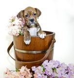Boxer in der Wanne mit Blumen Lizenzfreie Stockfotos