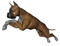 Boxer dog. 3D rendered boxer dog on white background isolated Stock Images
