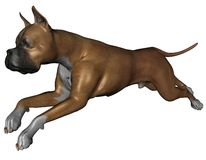 Boxer dog. 3D rendered boxer dog on white background isolated Stock Photo