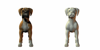 Boxer dog 3d model. Isolated on white Royalty Free Stock Images