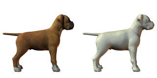 Boxer dog 3d model Royalty Free Stock Photo