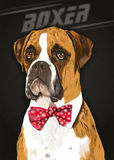Boxer dog Stock Image