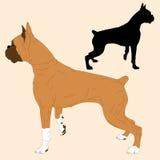 Boxer dog black silhouette realistic Stock Photos