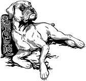 Boxer. Dog boxer breed, black and white illustration vector illustration