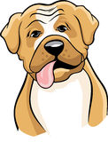 Boxer dog cartoon. A colored illustration of a boxer breed dog Stock Photo