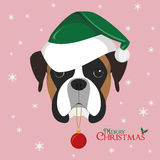 Boxer dog with green Santa`s hat and Christmas toy ball Royalty Free Stock Image