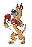 Boxer Dog Stock Photography
