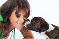 Boxer dog kissing a woman. At studio Royalty Free Stock Images