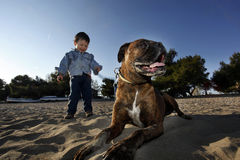 Boxer dog and little boy Royalty Free Stock Images