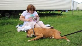 Boxer dog at rest in garden stock video