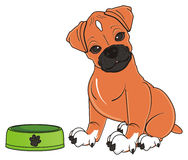 Boxer dog want to eat. Puppy of boxer dog sit near an empty round bowl Stock Photo