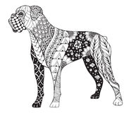 Boxer dog zentangle stylized, vector, illustration, freehand