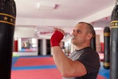 Boxer drinking water stock photos