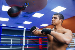 Boxer exercising with the speed bag Stock Image