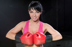Boxer Female Stock Photo