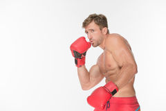 Boxer fighter in red boxing gloves Stock Photo