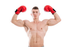 Boxer flexing biceps. And wearing red boxing gloves on white background royalty free stock photos