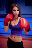 Boxer girl Royalty Free Stock Images