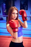 Boxer girl Royalty Free Stock Image