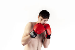 Boxer with gloves for fight Stock Image