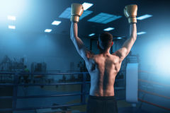 Boxer in gloves hands up on the ring, back view royalty free stock photography