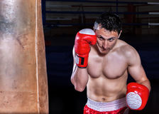 Boxer gloves on in training attitude Stock Image