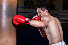 Boxer gloves on in training attitude Royalty Free Stock Image