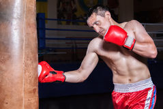 Boxer gloves on in training attitude Royalty Free Stock Photos