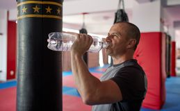 Boxer drinking water stock images