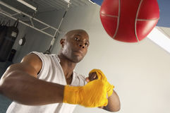 Boxer Hitting Speed Bag In Gym Stock Photography