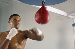 Boxer Hitting A Speed Bag In Gym Stock Photos