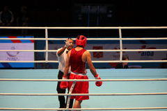 Boxer knockout referee counting Stock Image