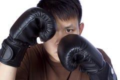 Boxer lokalisiert stockfoto
