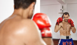 Boxer looking in the mirror Royalty Free Stock Image