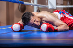 Boxer lying knocked out in a boxing ring Stock Image