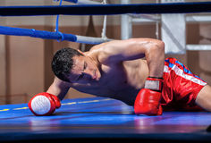 Boxer lying knocked out in a boxing ring Stock Images