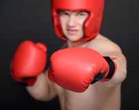 Boxer Man Royalty Free Stock Image