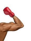 Boxer muscular Stock Photos