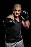 Boxer performing upright stance. On black background Stock Photos