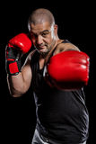 Boxer performing upright stance. On black background Stock Photography