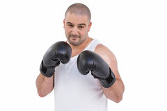 Boxer performing upright stance. On white background Stock Photo