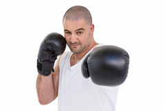 Boxer performing upright stance Stock Photo