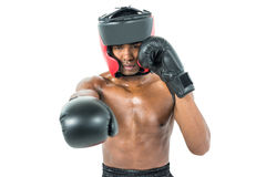 Boxer performing upright stance. On white background Stock Image
