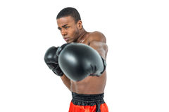 Boxer performing upright stance. On white background Royalty Free Stock Photo
