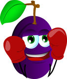 Boxer plum Stock Photos